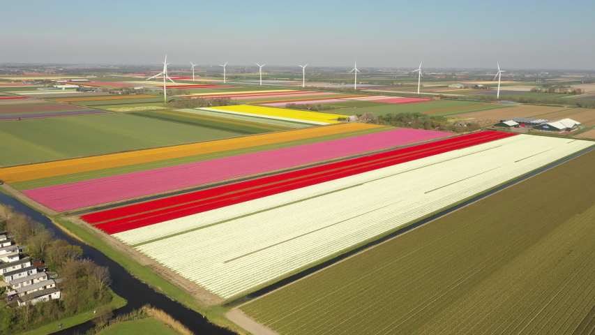 Flying over colorful fields of blooming tulips towards modern wind turbines, contrast between classic industry and new renewable energy in Holland  | Shutterstock HD Video #1041389062