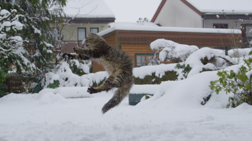 SLOW MOTION: Cute brown cat leaps into the air and tries to catch a snowball flying towards it as it plays in the snow lawn of a terraced house in the suburbs. Adorable frisky kitten playing in snow. | Shutterstock HD Video #1041492832