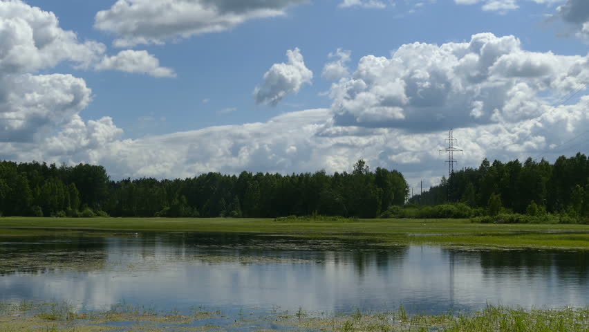 Lake wetland in the countryside with green algae in the summer of 2015 Russia  | Shutterstock HD Video #10416134