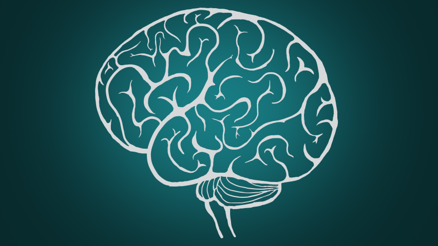 Human brain formation, animation. Concept of success. Business ideas, creative mind. | Shutterstock HD Video #1042431382