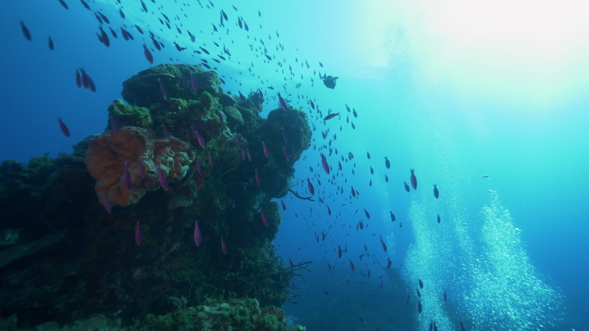 Underwater, pov, a school of fish next to a coral reef, The Bahamas | Shutterstock HD Video #1042794682