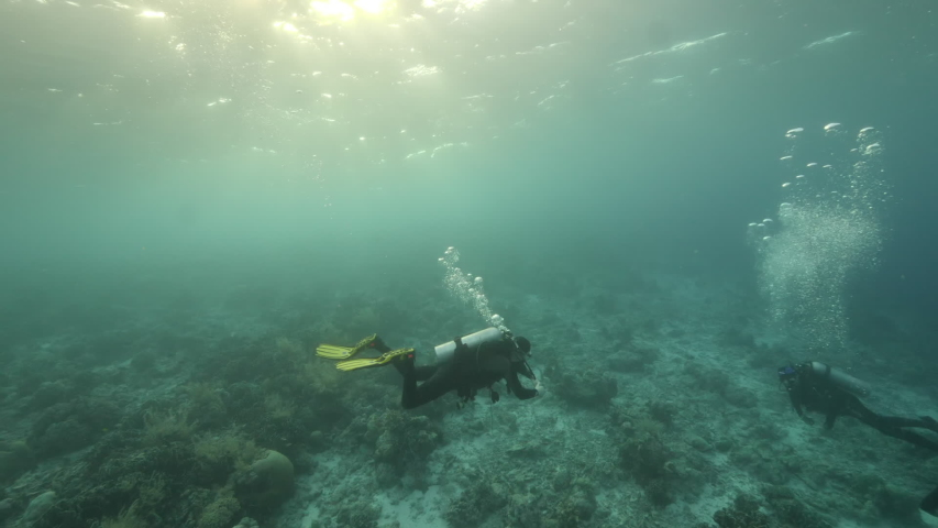 Slow motion shot Diver on background School of fish underwater landscape in Kepulauan Banda Indonesia. Swimming in world colorful beautiful wildlife of reefs and algae. Inhabitants in search of food. | Shutterstock HD Video #1042808812