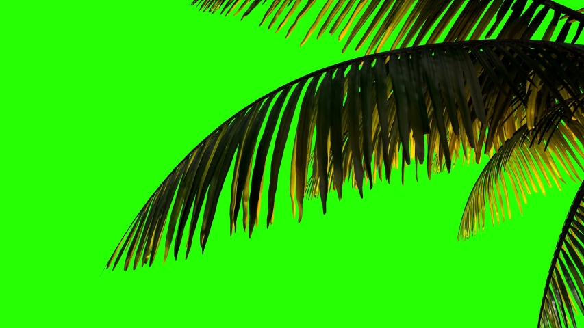 Palm branch and leaves in the wind on a greenscreen background.   | Shutterstock HD Video #1044510382