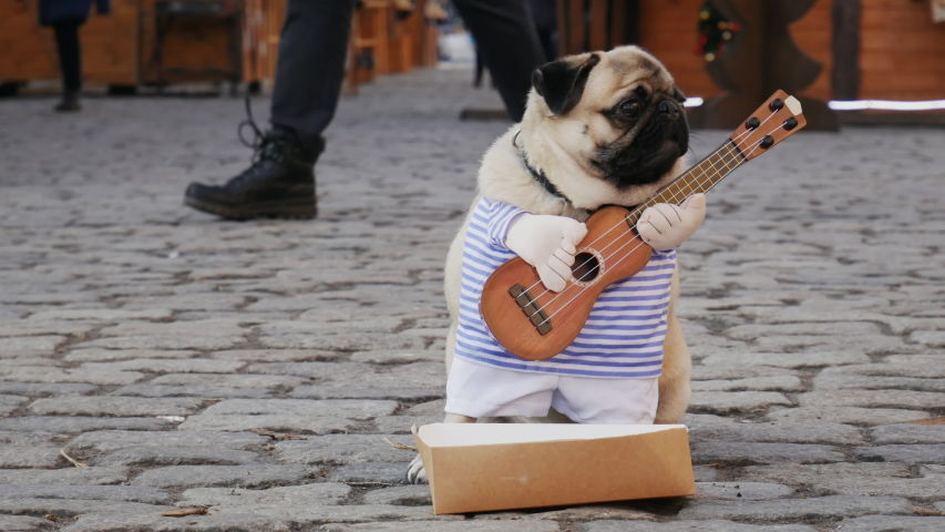 Cute funny pug dog earning with playing music wearing in costume with guitar on the city street, passerby throws money in a box, people on background | Shutterstock HD Video #1044780112