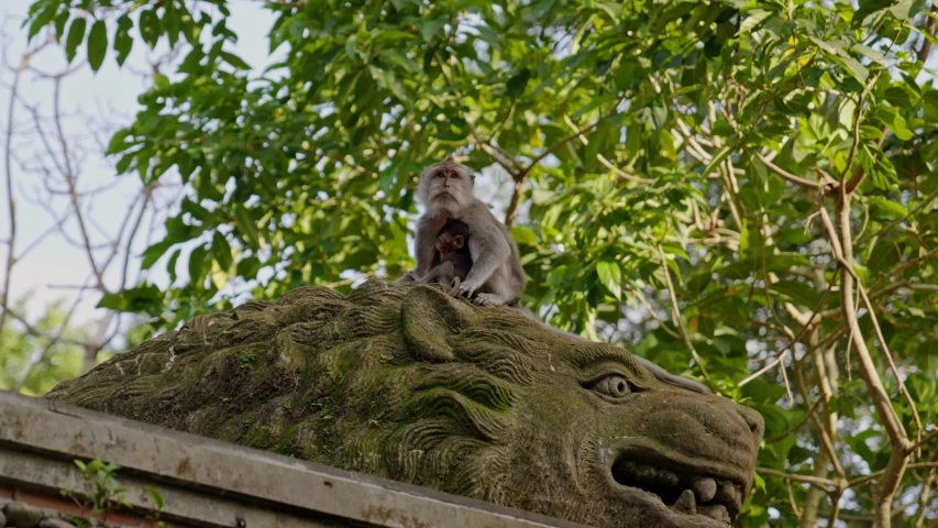 Visiting monkey forest at Ubud, Bali | Shutterstock HD Video #1044792622
