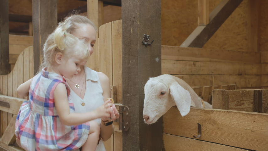 Little Girl and her mother feeding a goat with Carrot in the Farm. Happy family in zoo. Love to animals since youth | Shutterstock HD Video #1044804292