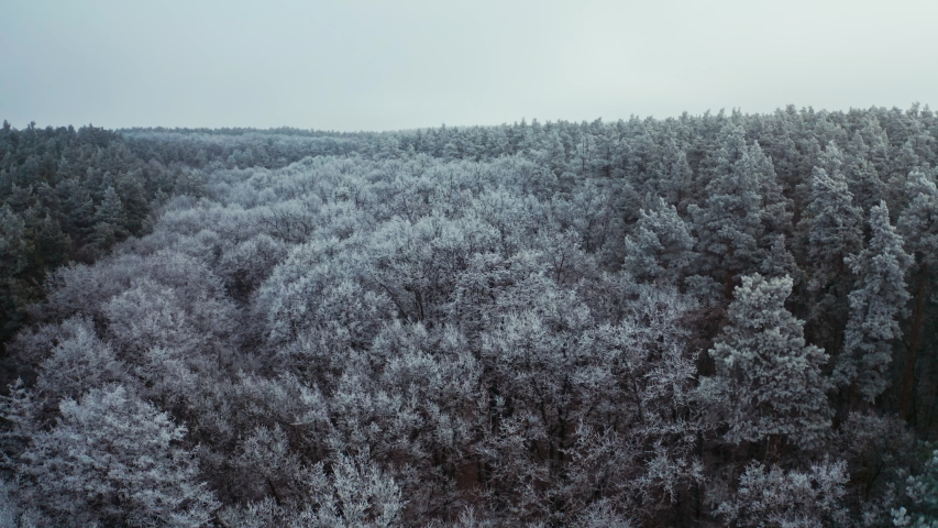 Panoramic view of thick forest in winter. Fantastic landscape of nature with snowy white trees. Top view of trees covered with frost. Aerial view. | Shutterstock HD Video #1044901732