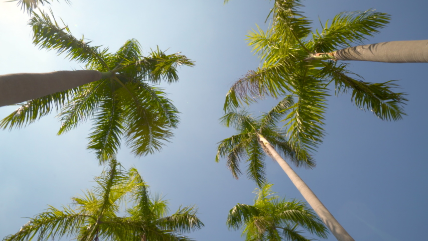 View of the Palm Trees Passing by Under Sunny Blue Skies. Wide Shot of Driving with Camera Looking up at Palm Trees in 4K format POV Tropical Vacation | Shutterstock HD Video #1045161292