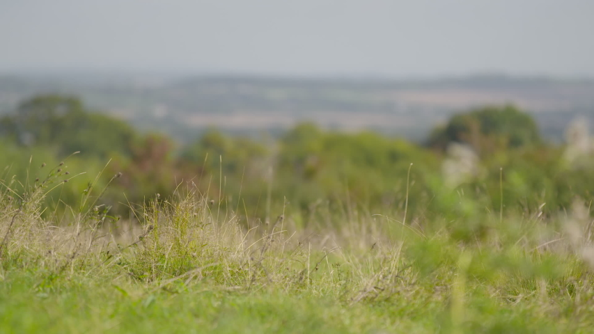 Low angle shot of short grass on a hilltop, rack focusing to a distant valley below   Shutterstock HD Video #1046932882