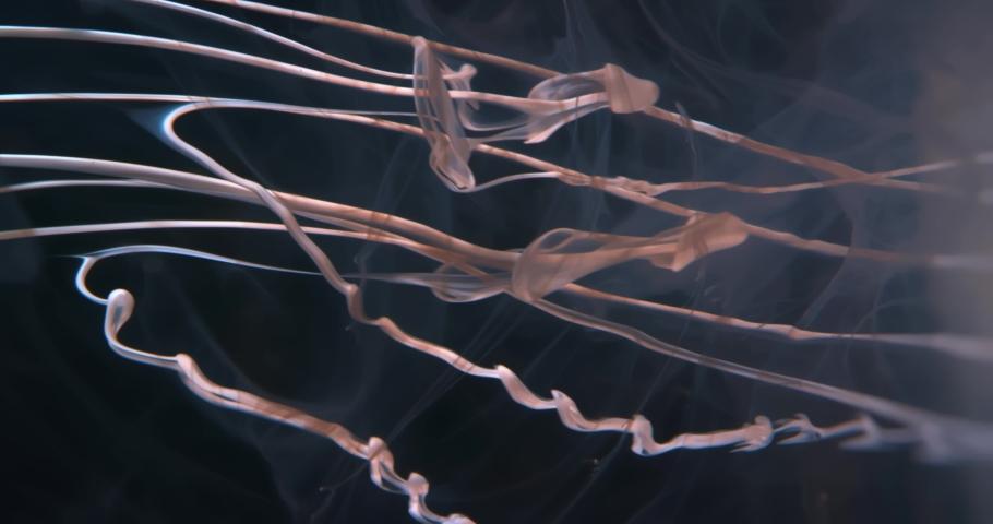 White  Fluid  in Motion underwater. Black Background. Macro. Liquids Threads. | Shutterstock HD Video #1047055162
