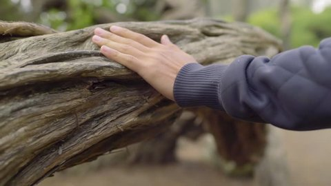 Man's Hand Grazes The Length Of A Tree As He Explores A Forest (Slow Motion)