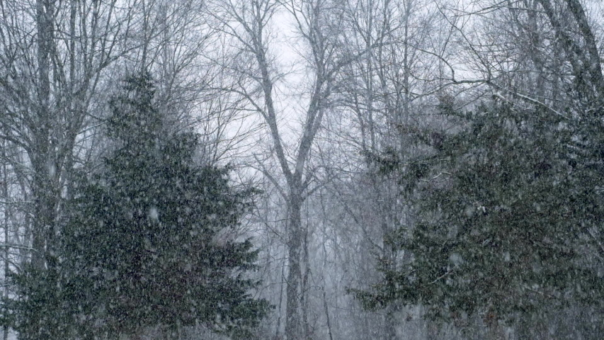 Snow falling gently in the woods during winter | Shutterstock HD Video #1049328472