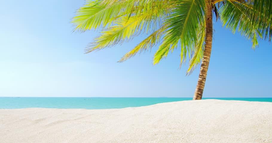 Sunny Day On Sandy Beach With Clear Blue Sky Warm Sun Light And One Palm