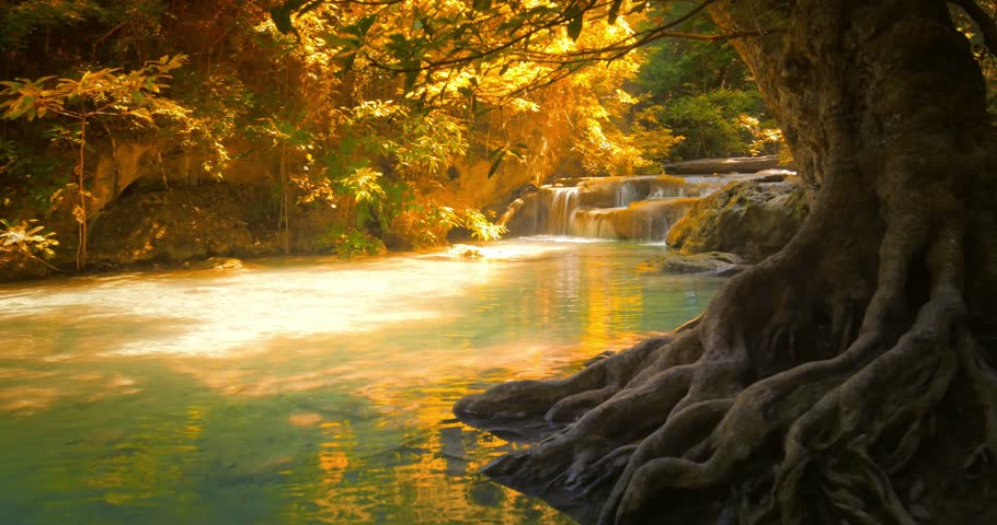 Beautiful nature background of tropical forest with big old tree trunk large roots and mountain river flowing calm and peaceful. Small waterfall falls from cascades in distance. Thailand rainforest