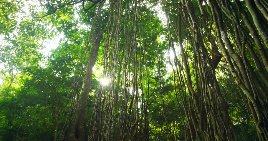 Sun light shines through rain forest canopy. Tracking video of wild and exotic flora and vegetation in beautiful national park in Thailand