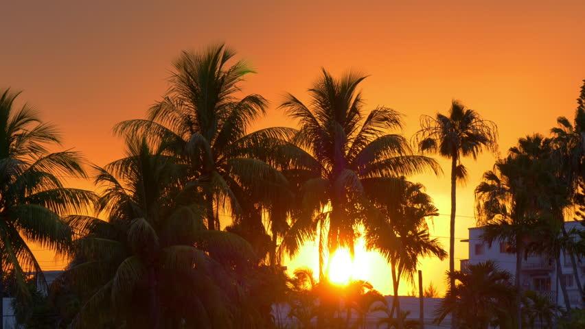 Miami Beach Sun Down In Palm Tree Sunset 4k Florida Usa Stockvideos Filmmaterial 10605302
