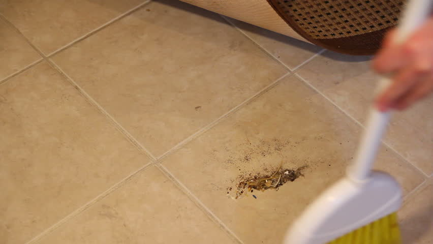Sweeping Dirt Under Rug Video Clip & HD