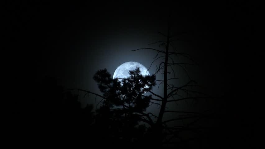 Moon through trees | Shutterstock HD Video #1066420
