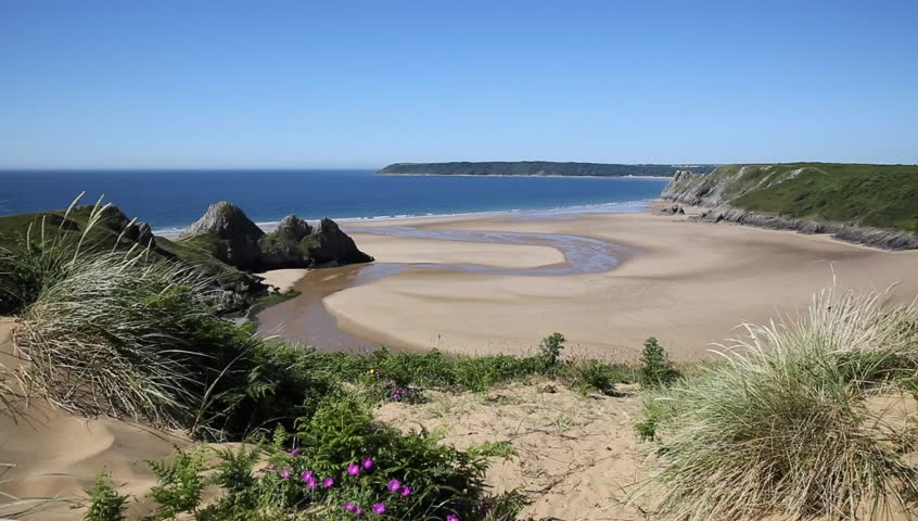 Three Cliffs Bay south coast the Gower Peninsula Swansea Wales uk with pink flowers near to Oxwich beautiful coastal location