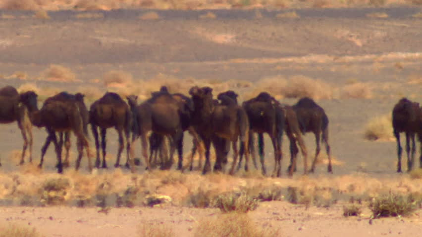 camels ratio Could lehman brothers' collapse be anticipated an examination using camels rating system using the camels ratios.