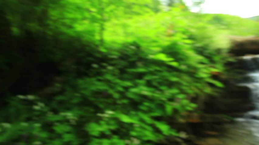 Creek in the woods   Shutterstock HD Video #10918757