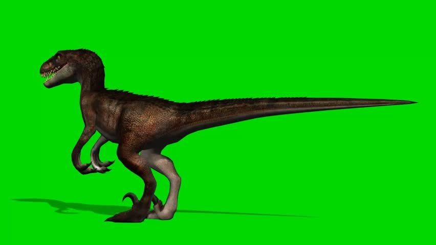 Velocirapor Dinosaurs stand and look around - green screen  #10961942