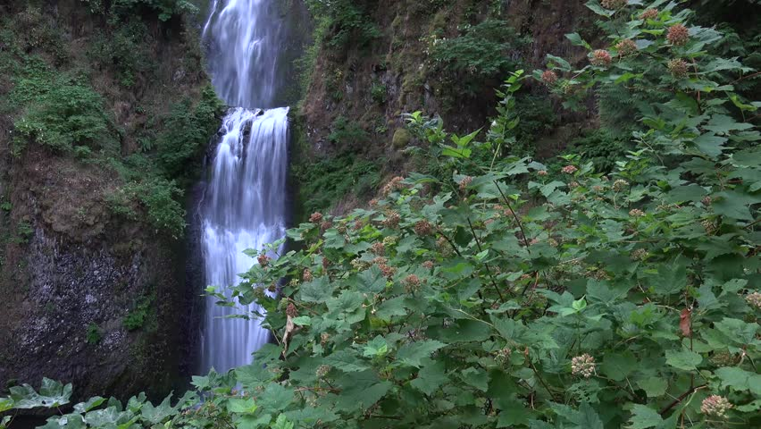 Multnomah Falls, Oregon from a distance with wind blowing the green trees.