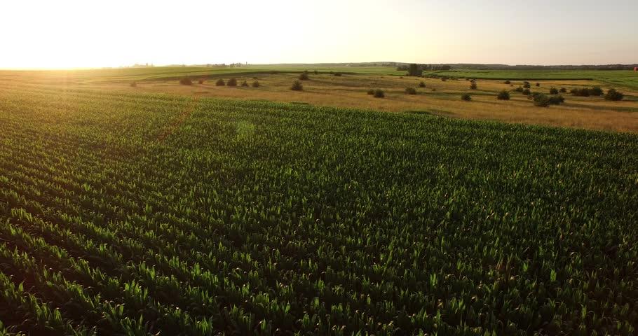 Farm Landscape Aerial Footage. 006