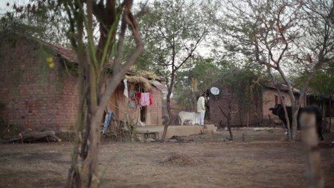 ANDHRA PRADESH, INDIA - CIRCA MAY 2013 - Village house with cows and man, India, long shot, shallow DOF