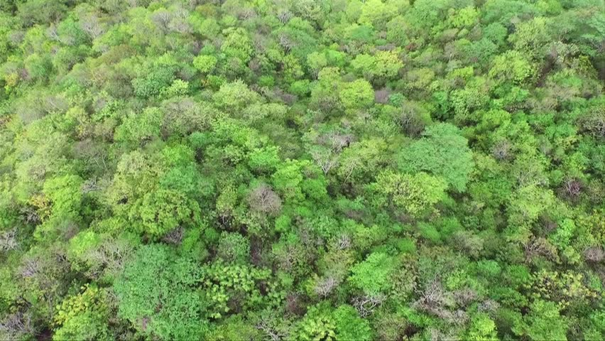 HUATULCO, MEXICO / MAY 2015 : Flying over the forest and road in the beautiful vacation place Huatulco in the south of the mexican littoral.