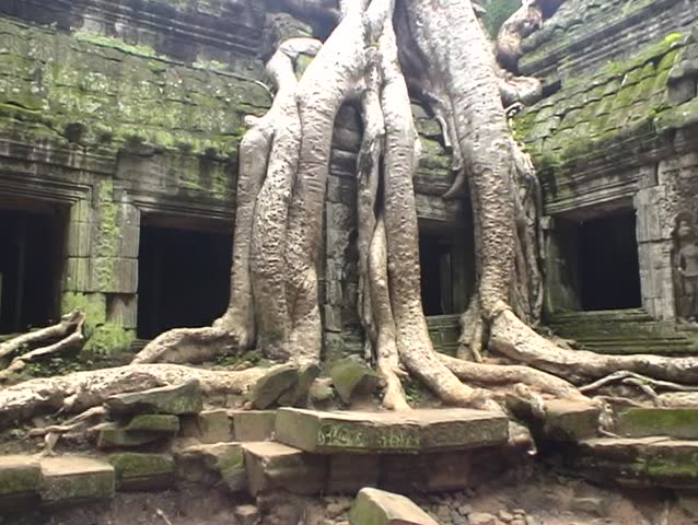 Tree roots growing over ruined Temple of Ta Prohm, Angkor, Cambodia.