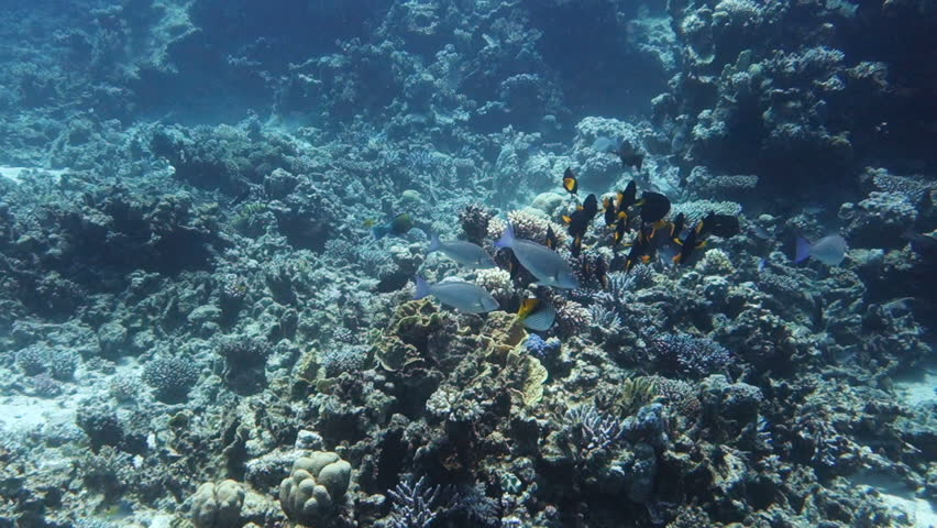 Image result for Beautiful coral reefs in Indonesia