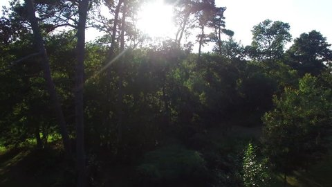 Majestic aerial top shot of beautiful forrest treetops at sunset. Panorama. Aerial View. Fly Over. Beautiful 4K Landscape