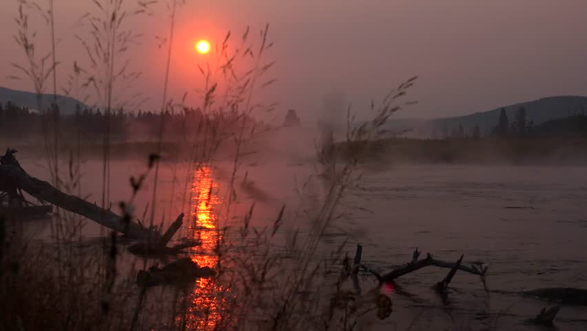 Yellowstone National Park, Madison River, flowers, beautiful quiet river at beautiful sunrise over steamy foggy river
