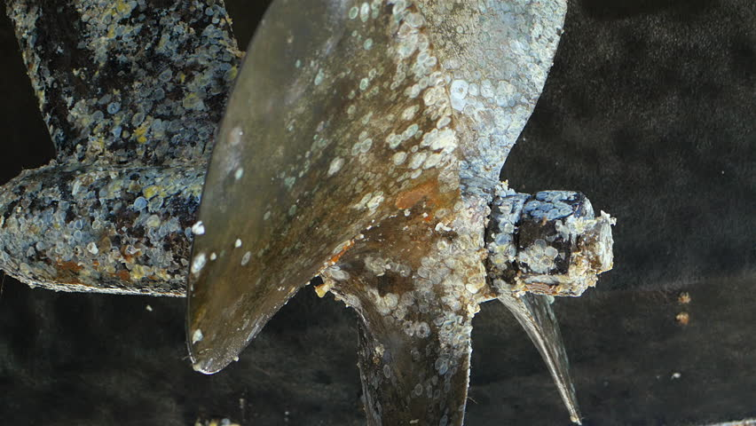 Boat propeller covered with barnacles after being scraped off From twin prop boat Sept 2015