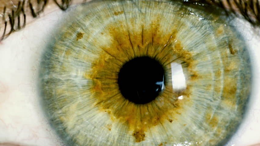 Female green eye close up extreme macro zoom in iris.HD real time extreme close up shot of the wide open human eye of a female.Big zoom in,eye blinking. | Shutterstock HD Video #12056993