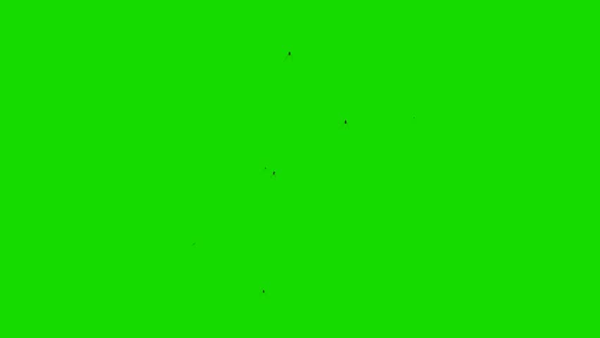 Swarm of Flying Insects on a Green Screen Background