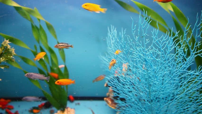colourful plastic aquarium background