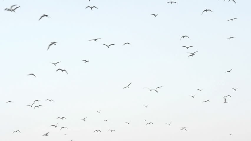 Sea gulls flying in the blue sunny sky over the coast slow motion #12659642