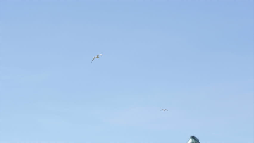 WS LA TS Seagulls flying in sky - USA, New York State, Niagara Falls City | Shutterstock HD Video #12707972