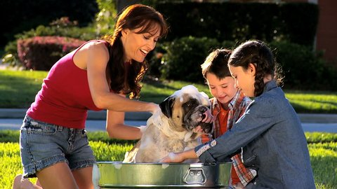 Young mom & her children bathing the family bulldog  in the garden