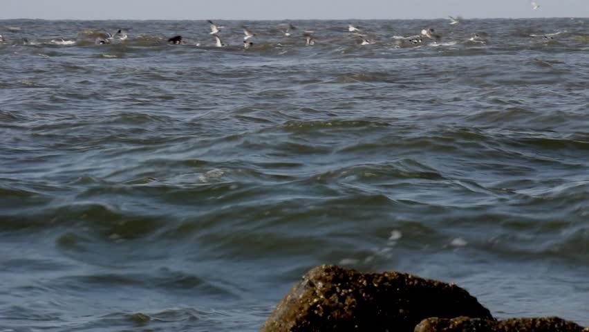 Edisto Beach Sc Usa Incoming Tide In Morning Light