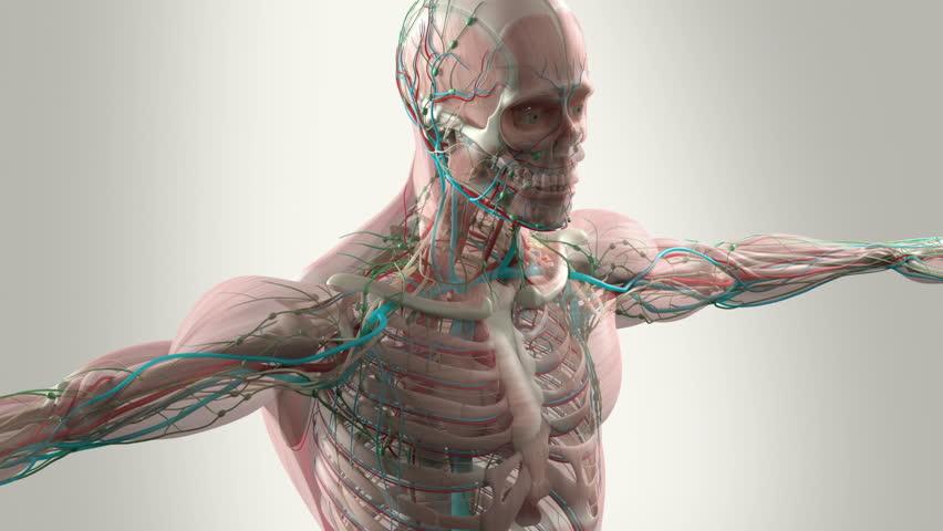 Human Anatomy Animation Showing Head Stock Footage Video 100