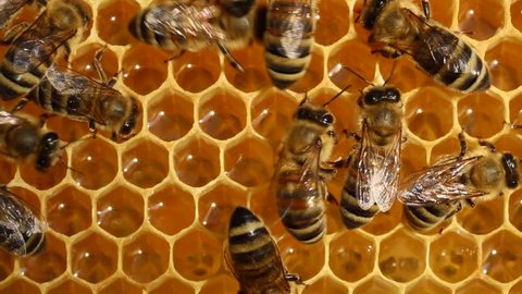 Work bees in hive.