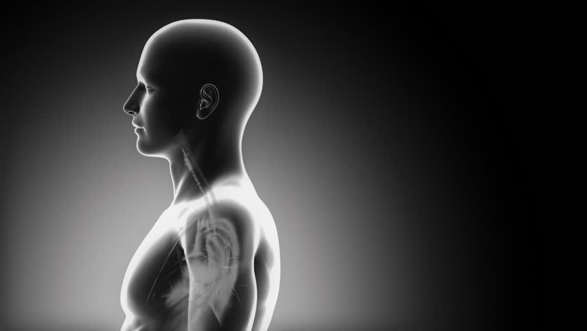 Stock Video Of Male Brain Medical Scan Anatomy 1371478 Shutterstock