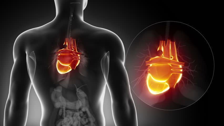 Stock Video Clip of With jogging to healthy heart | Shutterstock