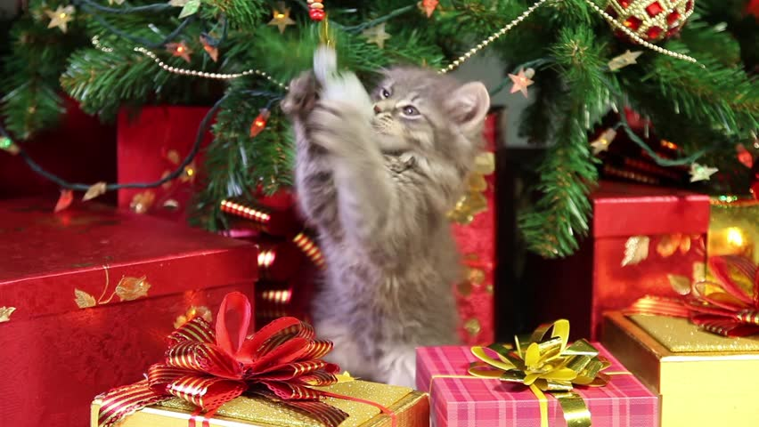 Little grey kitten playing with Christmas decorations under a Christmas tree