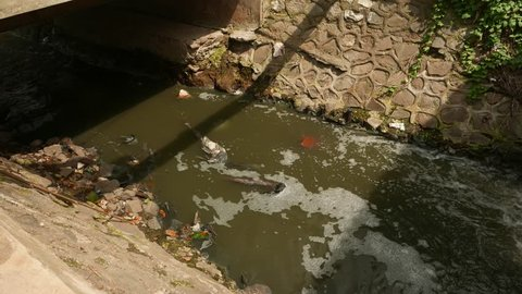 Gutter illuminated by sunlight. foamy flow of raw sewage and floating litter. Stream flowing into the shaded area over concrete banks, central Jakarta area.