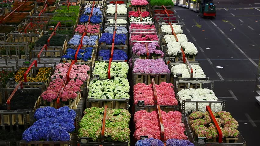 information system alsmeer flower auction We apologize for our system failure hotels near aalsmeer flower auction aalsmeer flower auction is an interesting attraction to spend a few hours.