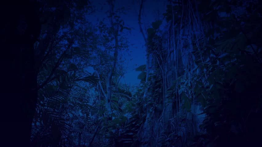 Passing Overgrown Cliff Face In Jungle At Night